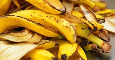 Casca de Banana para as Orquídeas ,São dois os principais nutrientes extraídos desses alimentos e eles são sem dúvidas,Casca de Banana para as Orquídeas
